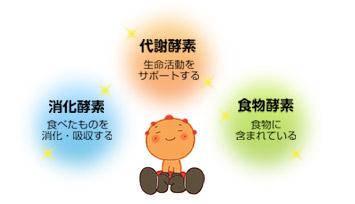 消化酵素、代謝酵素、食物酵素
